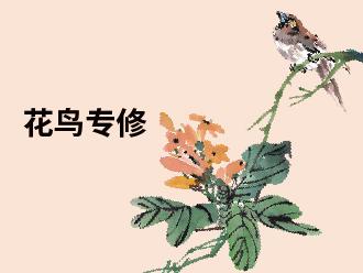 花鸟精品专修课